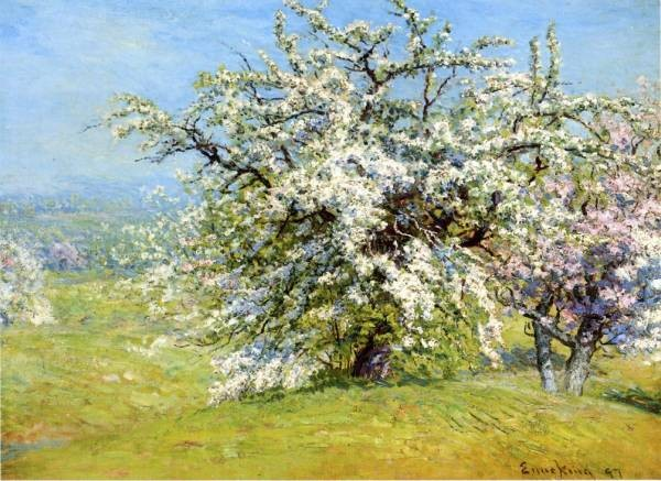 Blooming Meadows